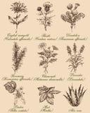 Λουλούδια και χορτάρια καθορισμένα διανυσματική απεικόνιση