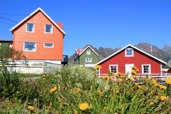 Λουλούδια και χρώματα Henningsvaer Στοκ εικόνα με δικαίωμα ελεύθερης χρήσης
