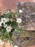 Λουλούδια και Stone Στοκ φωτογραφία με δικαίωμα ελεύθερης χρήσης