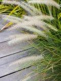 Λουλούδια καλάμων και ξύλινη διάβαση πεζών Στοκ εικόνα με δικαίωμα ελεύθερης χρήσης