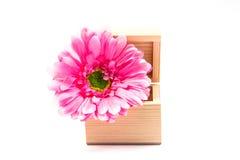 Λουλούδια κιβωτίων στοκ εικόνες με δικαίωμα ελεύθερης χρήσης