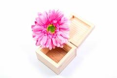 Λουλούδια κιβωτίων στοκ φωτογραφίες