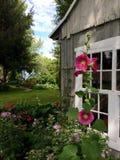 Λουλούδια κοντά στο καλοκαίρι φραγμών Στοκ Εικόνες