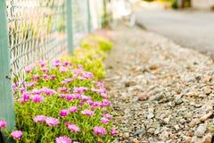 Λουλούδια κράσπεδων στοκ φωτογραφία με δικαίωμα ελεύθερης χρήσης