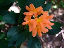 Λουλούδια κράσπεδων Στοκ Εικόνες