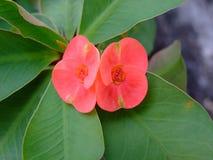 Λουλούδια κράσπεδων στοκ φωτογραφίες