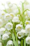 Λουλούδια κρίνος--ο-κοιλάδων Στοκ φωτογραφίες με δικαίωμα ελεύθερης χρήσης
