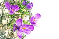 Λουλούδια κρόκων άνοιξη με τη διακόσμηση αυγών Πάσχας Στοκ φωτογραφία με δικαίωμα ελεύθερης χρήσης