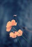 Λουλούδια κόσμου στο αναδρομικό χρώμα Στοκ Εικόνες
