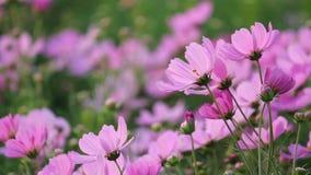 Λουλούδια κόσμου φιλμ μικρού μήκους