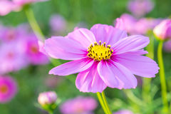 Λουλούδια κόσμου στοκ εικόνα