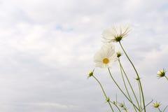 Λουλούδια κόσμου Στοκ Εικόνες