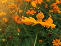 Λουλούδια κόσμου Στοκ εικόνα με δικαίωμα ελεύθερης χρήσης