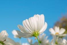 Λουλούδια κόσμου Στοκ φωτογραφία με δικαίωμα ελεύθερης χρήσης