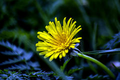 Λουλούδια Λεπτομέρειες του πάρκου Εγκαταστάσεις με το μακρο φακό ματιών Στοκ φωτογραφία με δικαίωμα ελεύθερης χρήσης