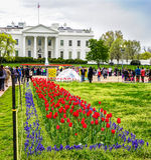 Λουλούδια Λευκών Οίκων της Ουάσιγκτον Στοκ φωτογραφία με δικαίωμα ελεύθερης χρήσης