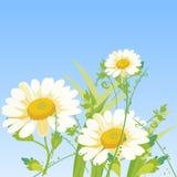 Λουλούδια μαργαριτών κινούμενων σχεδίων ελεύθερη απεικόνιση δικαιώματος