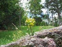Λουλούδια μεταξύ των βράχων Στοκ φωτογραφία με δικαίωμα ελεύθερης χρήσης