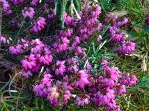 Λουλούδια μεταλλικού θόρυβου Στοκ εικόνες με δικαίωμα ελεύθερης χρήσης