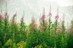 Λουλούδια με τα βουνά στο υπόβαθρο Στοκ εικόνες με δικαίωμα ελεύθερης χρήσης
