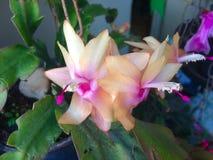 Λουλούδια με τα μικτά χρώματα Στοκ Φωτογραφία