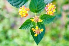 Λουλούδια με τα πράσινα φύλλα Στοκ Εικόνα