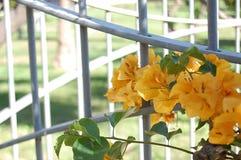 Λουλούδια με την πύλη Στοκ Εικόνες