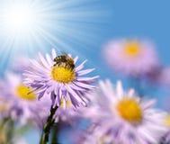 Λουλούδια με τη μέλισσα Στοκ φωτογραφίες με δικαίωμα ελεύθερης χρήσης