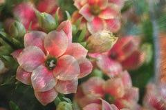 Λουλούδια με τη σύσταση κτυπημάτων χρωμάτων Στοκ φωτογραφία με δικαίωμα ελεύθερης χρήσης