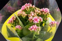 Λουλούδια με το μαύρο υπόβαθρο Στοκ Εικόνες