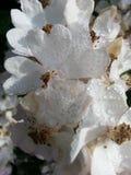 Λουλούδια με το πρωί που οφείλεται Στοκ εικόνες με δικαίωμα ελεύθερης χρήσης