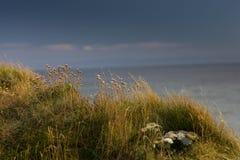 Λουλούδια με το υπόβαθρο θάλασσας Στοκ φωτογραφία με δικαίωμα ελεύθερης χρήσης