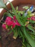 Λουλούδια μικροϋπολογιστών στοκ εικόνα με δικαίωμα ελεύθερης χρήσης