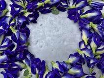 Λουλούδια μπιζελιών πεταλούδων Στοκ Φωτογραφίες