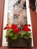 Λουλούδια μπροστά από το παράθυρο Στοκ Εικόνες