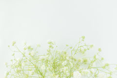 Λουλούδια μωρό-αναπνοής, ελαφριές, αερώδεις μάζες των μικρών άσπρων λουλουδιών Στοκ εικόνα με δικαίωμα ελεύθερης χρήσης