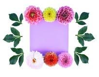 Λουλούδια νταλιών που απομονώνονται στο άσπρο υπόβαθρο στοκ φωτογραφίες