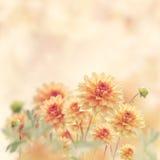 Λουλούδια νταλιών Στοκ Φωτογραφία