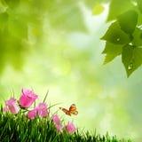 Λουλούδια ομορφιάς. Στοκ εικόνα με δικαίωμα ελεύθερης χρήσης