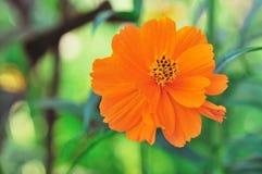 Λουλούδια ομορφιάς Στοκ φωτογραφία με δικαίωμα ελεύθερης χρήσης