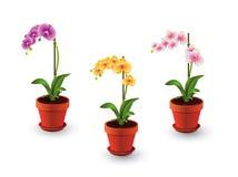 Λουλούδια ορχιδεών στο δοχείο Στοκ φωτογραφίες με δικαίωμα ελεύθερης χρήσης