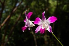 Λουλούδια ορχιδεών Στοκ φωτογραφία με δικαίωμα ελεύθερης χρήσης