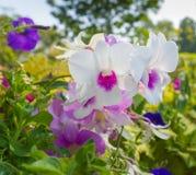 Λουλούδια ορχιδεών Στοκ Εικόνες