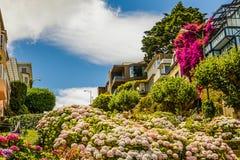 Λουλούδια οδών Lombard Στοκ Εικόνες