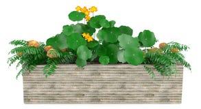 Λουλούδια παραθύρων στο κιβώτιο Στοκ φωτογραφίες με δικαίωμα ελεύθερης χρήσης