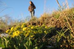 Λουλούδια παρατηρηθε'ντα Στοκ φωτογραφίες με δικαίωμα ελεύθερης χρήσης