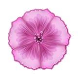 Λουλούδια πετουνιών Διανυσματική απεικόνιση