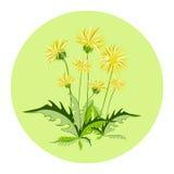 Λουλούδια πικραλίδων, διανυσματικό εικονίδιο Στοκ φωτογραφία με δικαίωμα ελεύθερης χρήσης