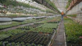 Λουλούδια ποτίσματος εργαζομένων μέσα απόθεμα βίντεο