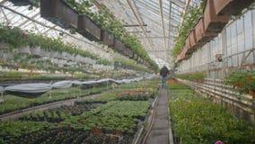 Λουλούδια ποτίσματος εργαζομένων μέσα φιλμ μικρού μήκους